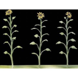 Andrea miniatures,54mm.Sunflowers.
